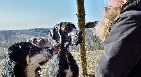 des chiens en voyage